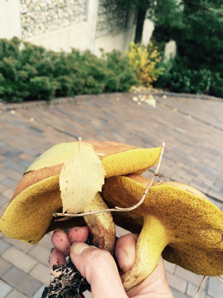 a zbieram na záhrade huby:-)