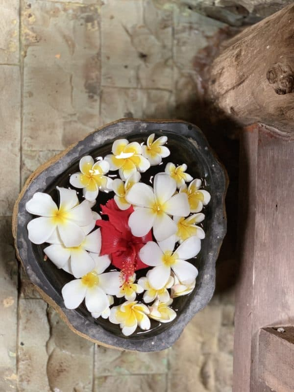 kvet Frangipani